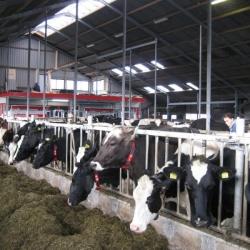 boerderij-lanenmar-stal