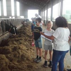 boerderijcamping-7